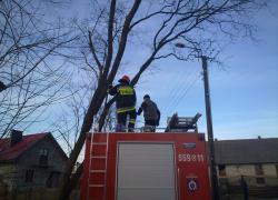 Usunięcie pochylonego drzewa zagrażającego linii elektroenergetycznej w Nadolu