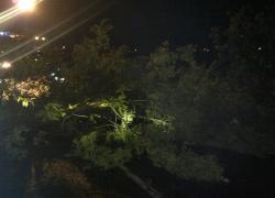 Powalone drzewo w Czymanowie.