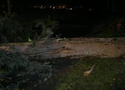 Powalone drzewo w Czymanowie. - 05.10.2012