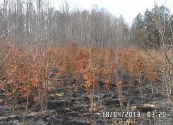 Pożar lasu w Słuszewie