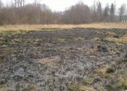 Pożar suchej trawy w Opalinie