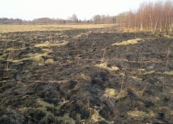 Pożar suchej trawy w Salinie