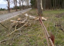 Powalone drzewo w Nadolu