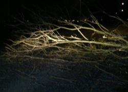 Powalone drzewo w Czymanowie