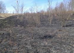 Pożar suchej trawy w Jęczewie