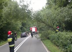Pochylone drzewo na trasie Nadole-Brzyno