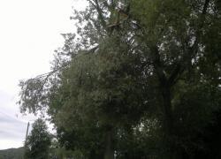 Nadłamany konar zwisający nad ulicą w Czymanowie