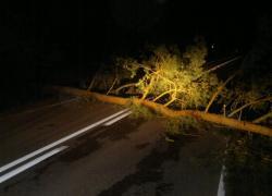 Powalone drzewo w Nadolu na ul. Kaszubskiej
