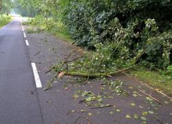 Gałęzie zalegające na trasie Nadole - Brzyno