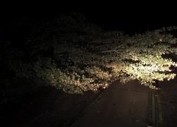Powalone drzewo na trasie Opalino - Tyłowo