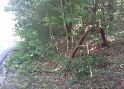 Powalone drzewo na trasie Opalino-Rybno