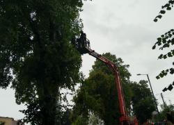 Powalone drzewo w Rybnie