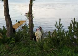 Gniazdo szerszeni nad jeziorem Żarnowieckim