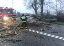 Powalone drzewo na skrzyżowaniu w Czymanowie