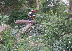 Powalone drzewa w Nadolu - 02.07.2019