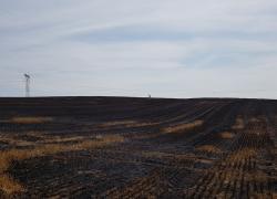Pożar zboża w okolicy miejscowości Chynowie