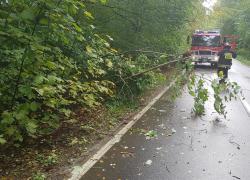 Pochylone drzewo na trasie Nadole - Brzyno