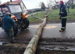 Powalone drzewo w Toliszczku