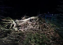 Powalone drzewo i uszkodzona linia elektroenergetyczna w Toliszczku