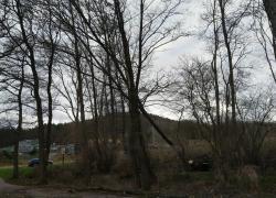 Niebezpiecznie pochylone drzewo w Czymanowie
