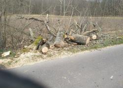 Powalone drzewo na trasie Mierzyno - Karczemka