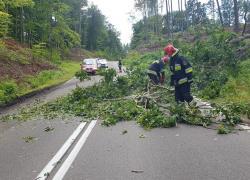 Powalone drzewo na trasie Czymanowo - Gniewino