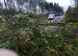 Powalone drzewo na trasie Czymanowo-Gniewino