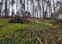 Powalone drzewo na trasie Czymanowo - Gniewino - 06.05.2021