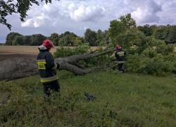 Pożar drzewa w Bychowie
